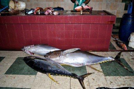 Mercato del pesce a Male, Maldive