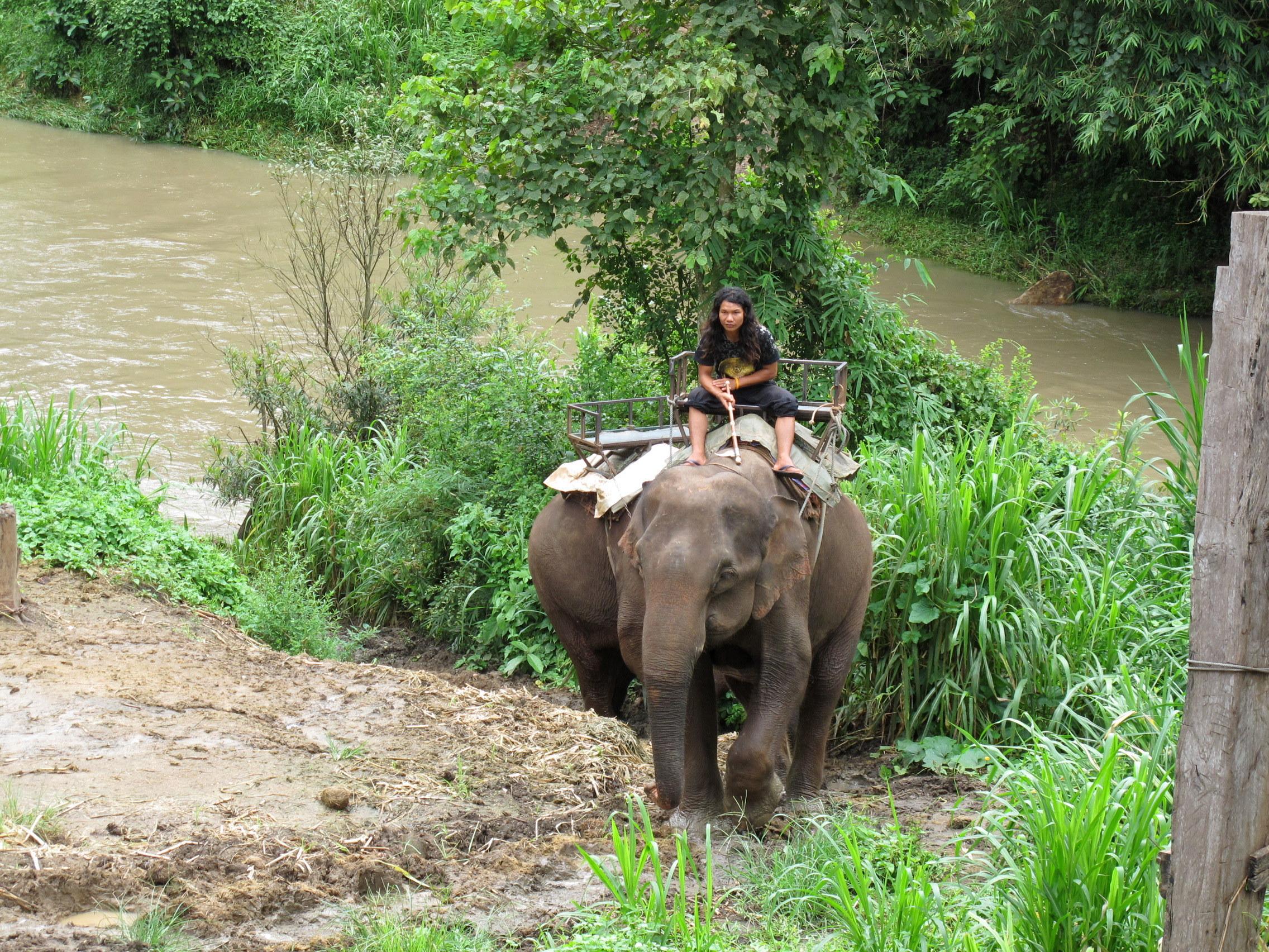 thailandia trekking dorso elefante