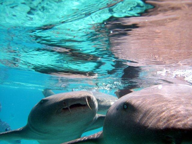 La top 10 dei viaggi avventura dal mondo blog di viaggi - Bagno con gli squali sudafrica ...