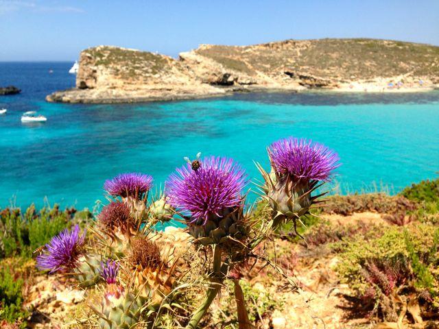 Malta Comino La Laguna Blu