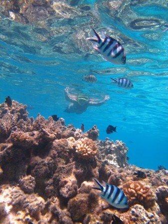 giardino dei coralli Bora Bora polinesia francese