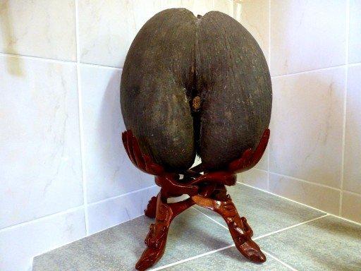 noce di cocco seychelles