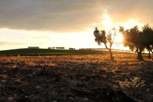 Matera, tramonto