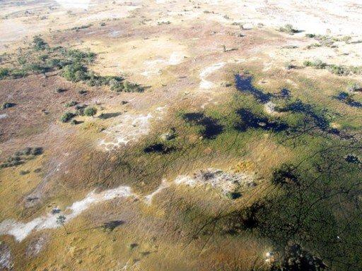 Okavango, Botswana, Africa, safari