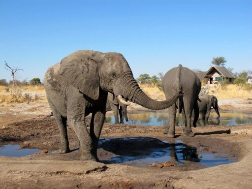 Botswana- Elefanti all'Elephant Sands
