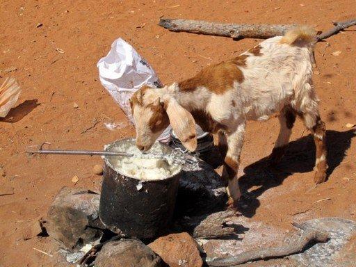 Importanza del bestiame per gli Himba