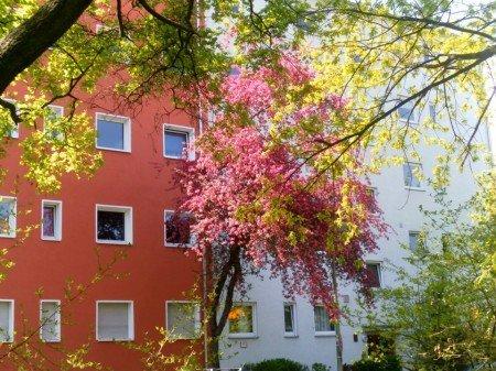 Primavera in città, Berlino