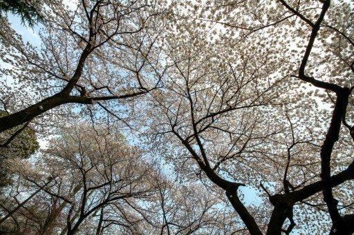 Parchi di Tokyo