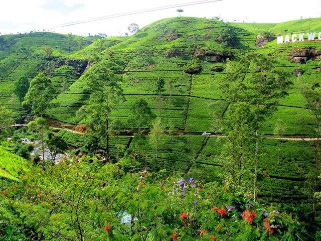 Destinazione Sri Lanka