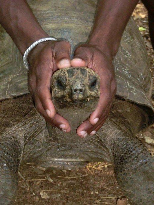 nosy-komba-tartaruga