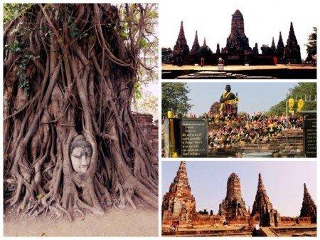 Buddha pianta