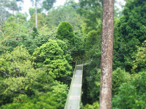 Se in Italia si passeggia per i centri storici, qui lo farete per la foresta pluviale..