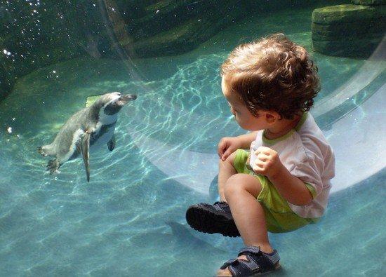 sealife attrazioni per i bimbi a berlino