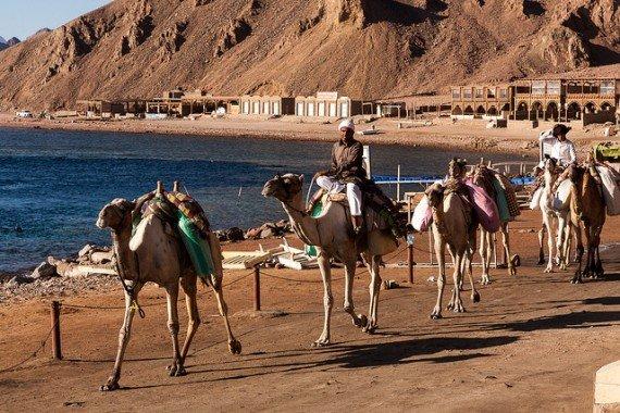 Dahab escursioni in cammello