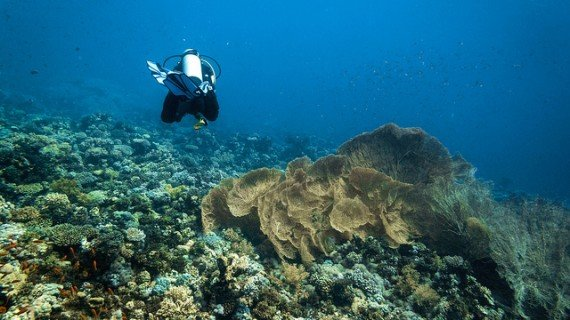 Dahab immersioni Mar Rosso Egitto