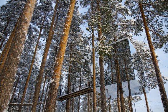 Tree Holtel- hotel più strani del mondo