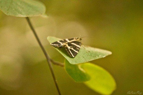 Farfalla cosa vedere a Rodi
