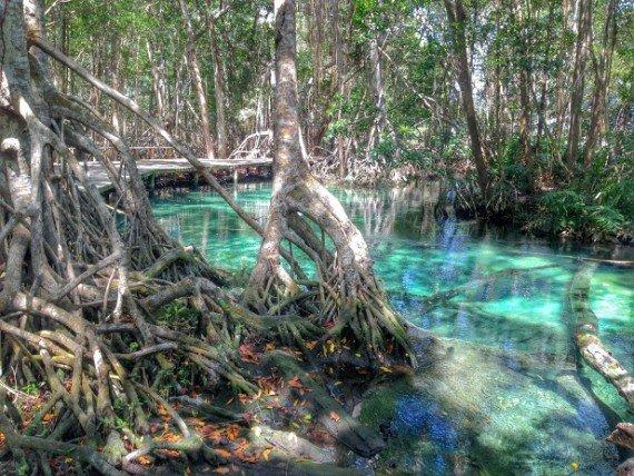 biosfera naturale di celestun, yucatan - messico