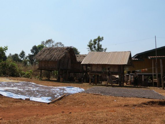 Caffè messo ad asciugare in un villaggio sul Bolaven Plateau