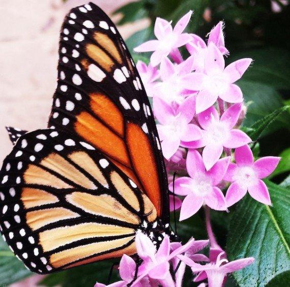 giardino farfalle costa rica