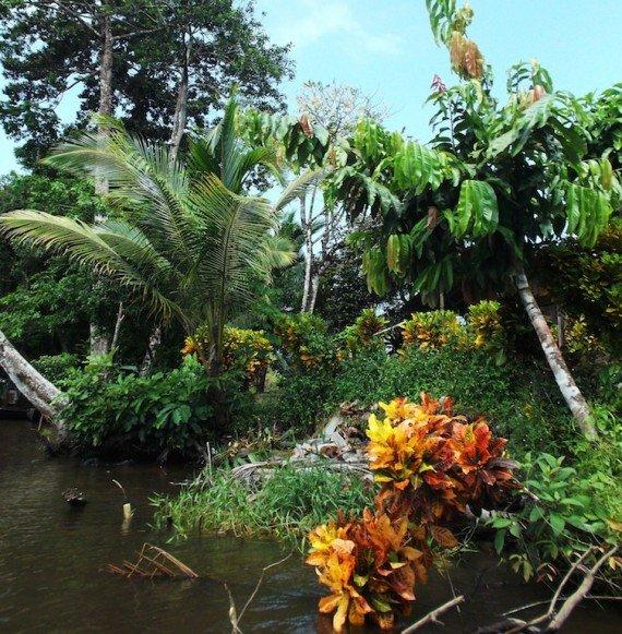 Tortuguero, viaggio in costa rica