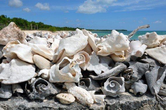 Playa Palancar Cozumel messico