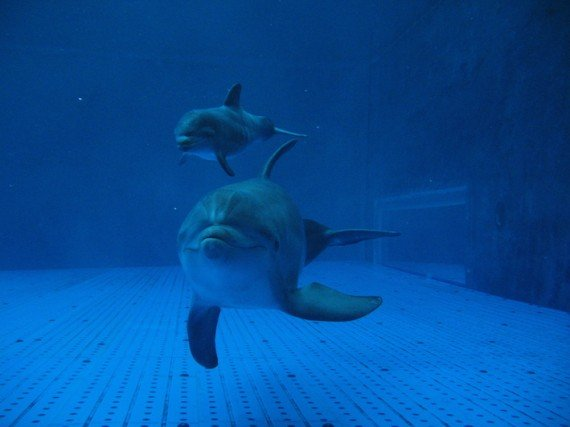 AcquariodiGenova cucciolo delfino con mamma Luna (13)