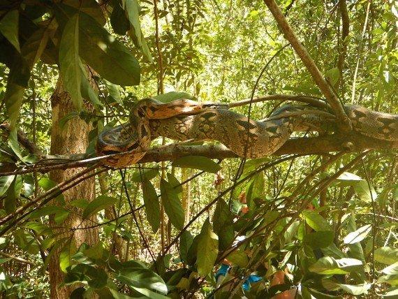 animali arcipelago di Nosy Be, Madagascar