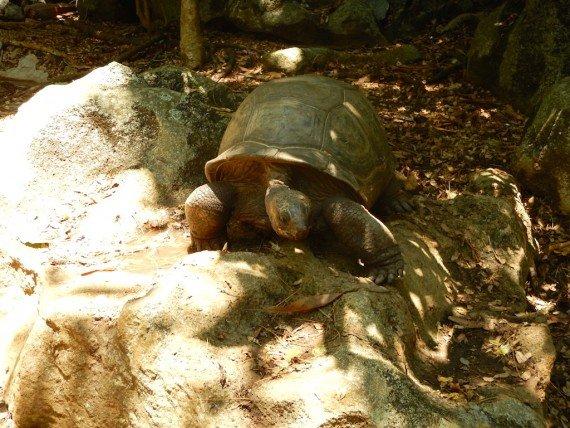 tartarughe arcipelago di Nosy Be, Madagascar