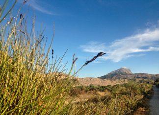 Sicilia panorama vegetazione