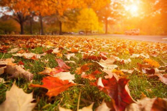 inverno-foglie