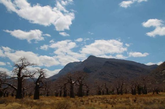 mbuyuni-baobab