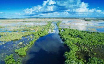 Everglades di shutterstock