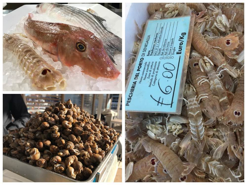 Collage_pesci_senigallia cosa mangiare