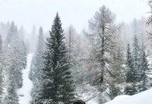 Passeggiata a rifugio Fuciade, Trentino
