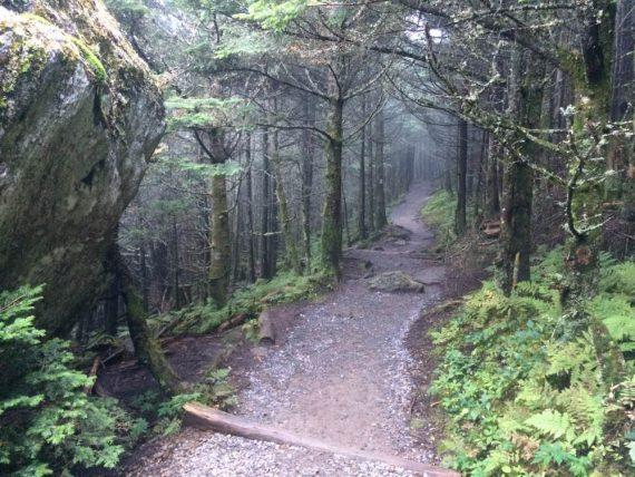 Passeggiata a Mount Mitchell Ruscello e rododendri Tomba Thomas Wolfe Aheville cosa vedere