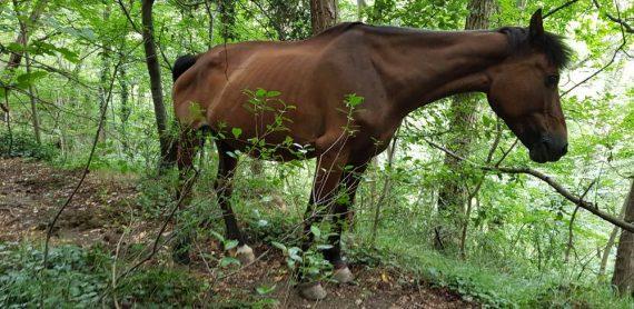 laghi della Tina cavallo