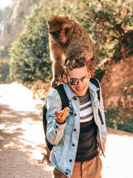scimmie cascate più alte del Marocco