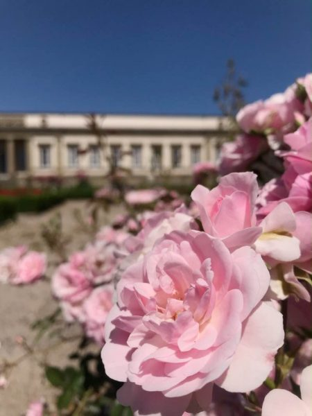 Parco rose